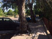 Interventi verde pubblico Sassari